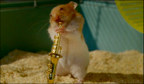 Cleverhamsters02__937700a