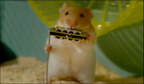 Cleverhamsters03__937711a